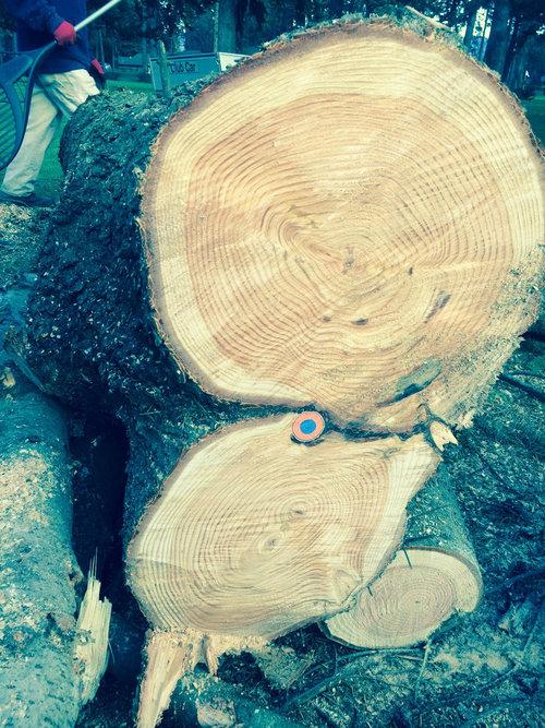 木を切ったらとんでも01