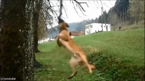 犬のダイナミックなひとり遊び07