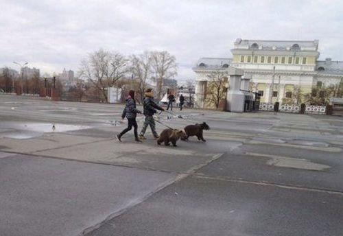 ロシアのクマ04