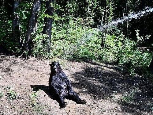 クマさんの水浴び01
