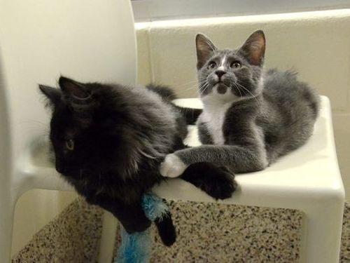 盲目の猫を黒猫が世話01