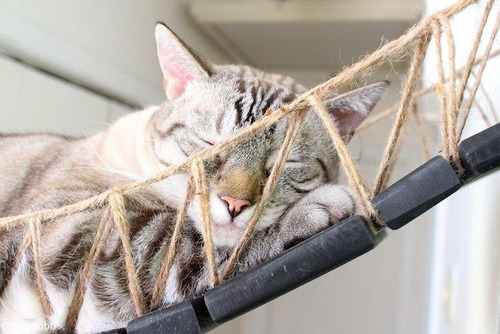 猫と吊り橋06