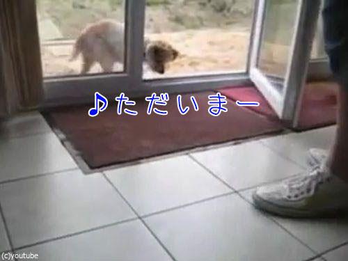 肉球をキレイキレイする犬00