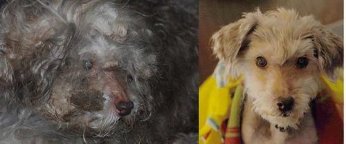 救助された犬や猫09