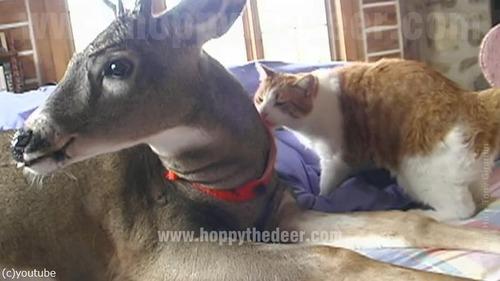 鹿と仲良しな猫01