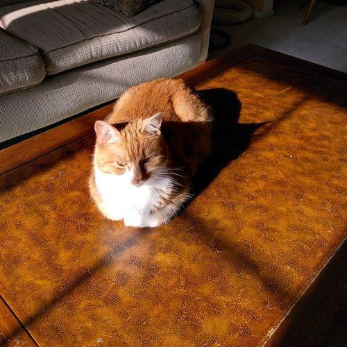 猫の「香箱座り」をパンの塊という理由11