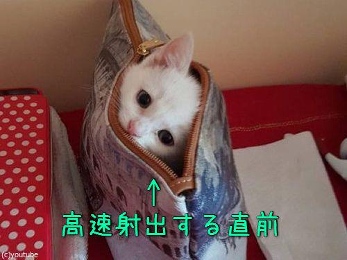 子猫の超高速「いないいないばあ」00