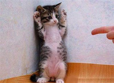 猫、手を上げろ