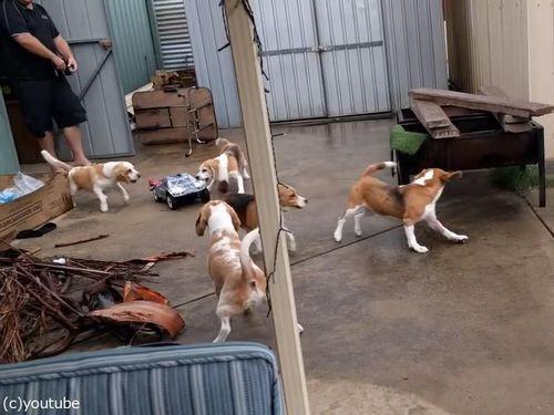 犬とラジコンカーと広い庭01