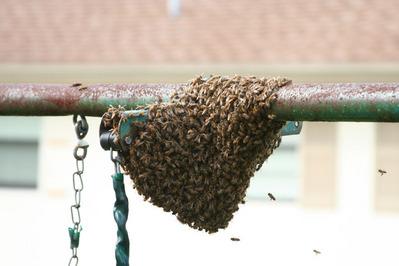 「家にハチの巣が…」素人が繰り広げたムチャな死闘02