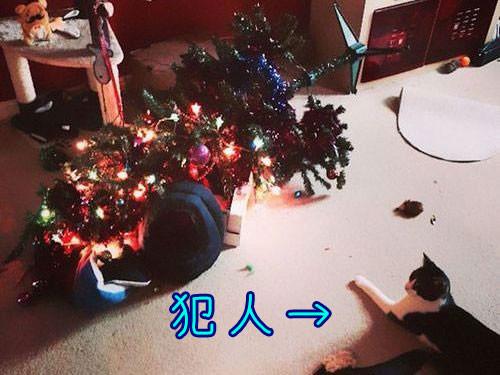 ペットからクリスマスツリーを守る戦い00