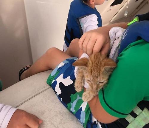 メキシコ湾で溺れていた子猫を救出02