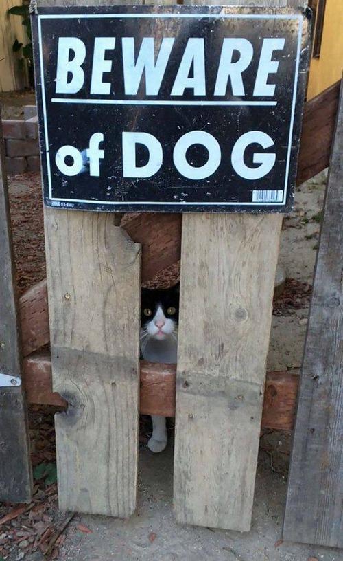 猛犬注意…と思ったら違う例09
