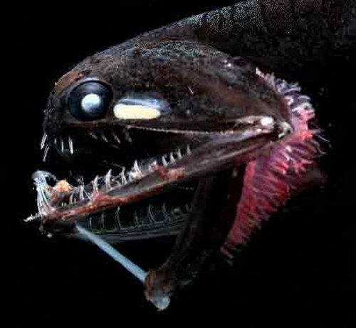深海の生き物01