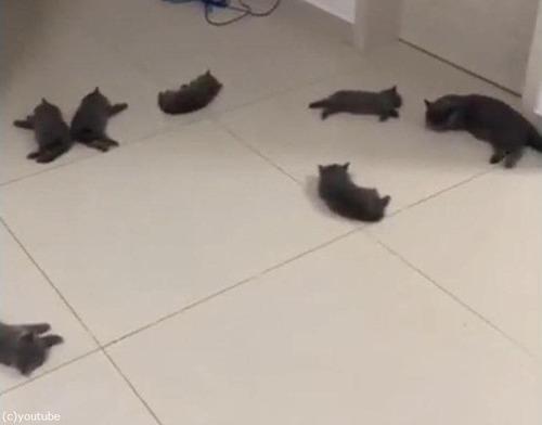 猫と床暖房02