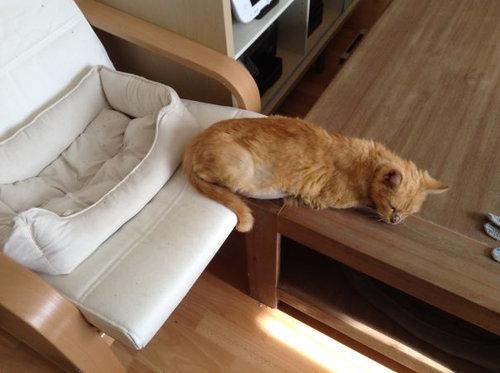 「猫あるある」14