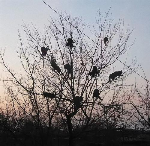 鳥のように木に止まる猫たち08
