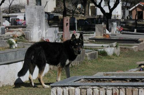 忠犬キャピタン05