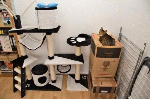 猫を飼った時の理想と現実22