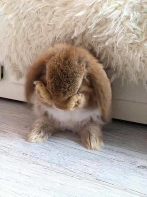 恥ずかしがるウサギ02