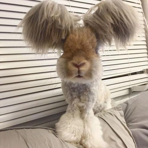 翼のような耳を持つウサギ04
