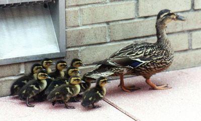 親子愛であふれる動物たち02