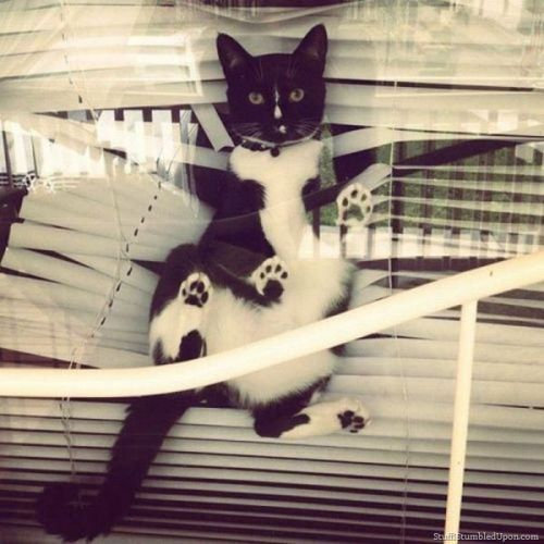 ノートに描かれた猫03