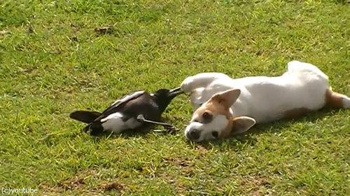 鳥と犬は親友になりうる01