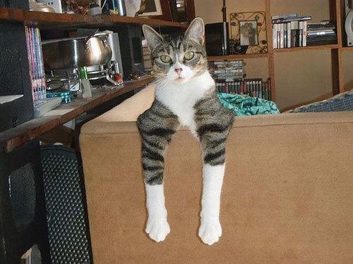 猫らしくない猫たち04