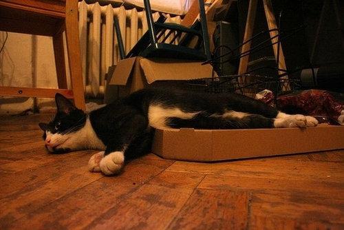 ピザ猫19
