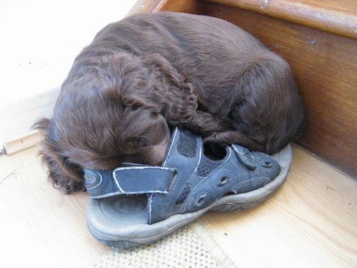 靴の中の犬08