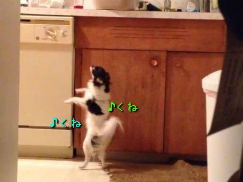 こっそり踊ってた犬