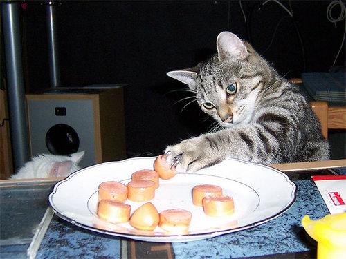 泥棒猫12