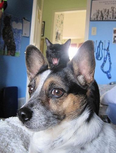 邪魔する犬と猫01