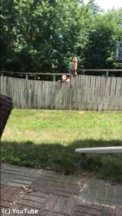 フェンス越しに遊ぶワンコと子ども04