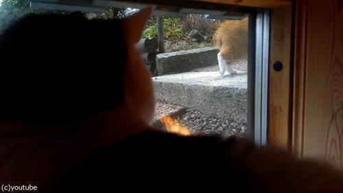 遅い猫04