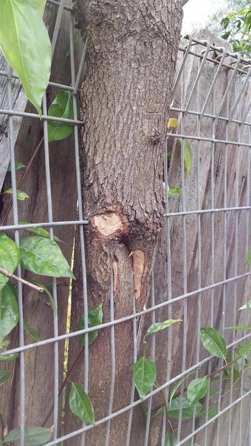 08生命力を感じる植物や木
