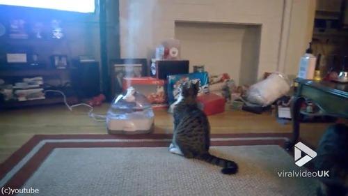加湿器VS猫03