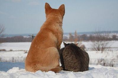 ロシアの犬と猫05