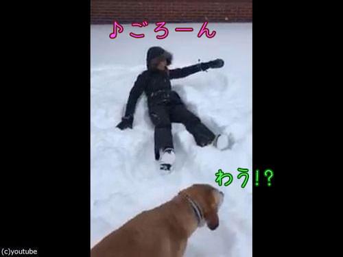 犬の目の前で雪に寝転がる00