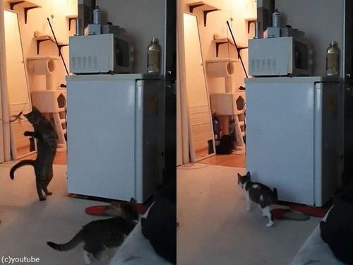 やさしいお姉ちゃん猫03
