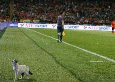 サッカー大好き猫00