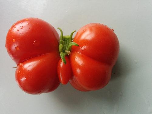 13変わった形の野菜・果物