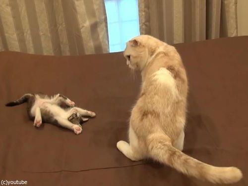怒られた子猫の謎ポーズ05
