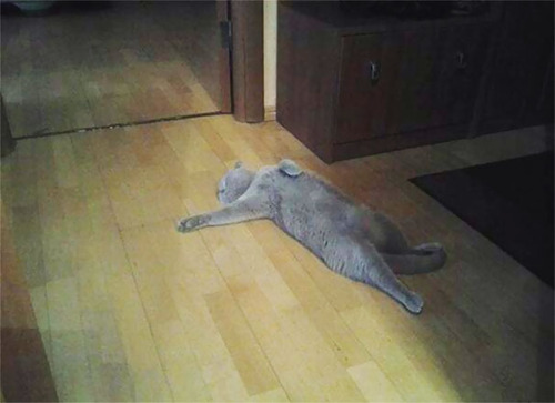 演技力の高い猫たち13