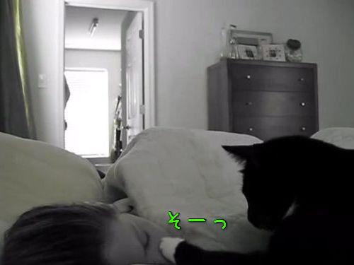 起こしてくれる猫00
