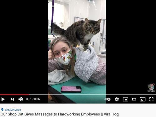 従業員をマッサージでいたわってくれる猫