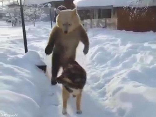 クマ「がおークマだぞぉー!」 犬「知ったこっちゃねー」07