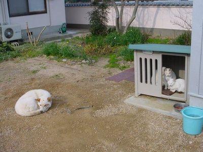 猫に犬小屋とられた