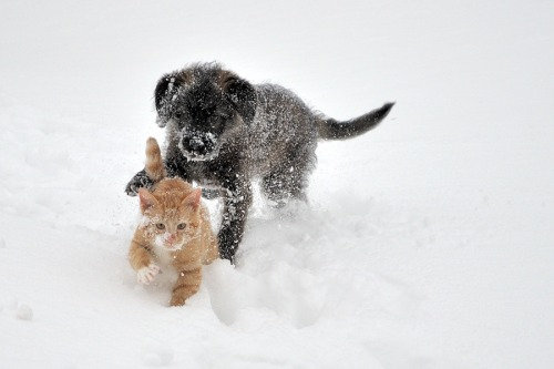 雪なんてへっちゃらな猫07